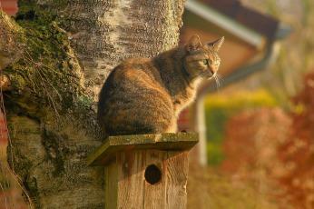 gato subido arbol